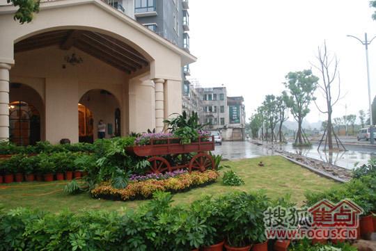 橄榄树庄园初现临桂 地中海浪漫风情神秘待放