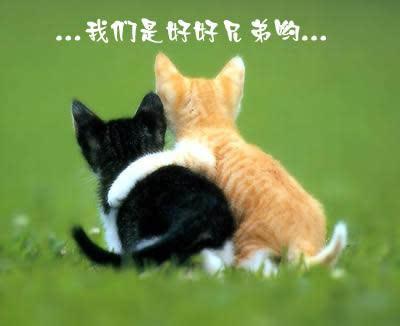 生气不开心图片动物世界