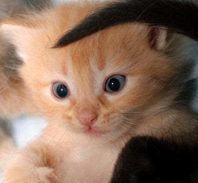 超级可爱小奶猫组图