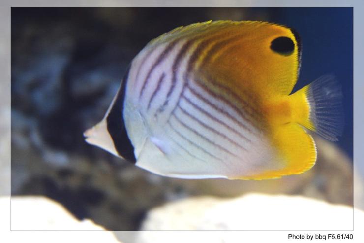 图片:我在家里拍的海底小动物