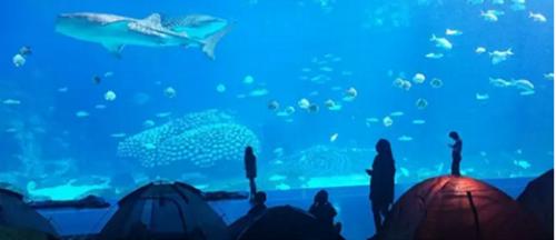 壁纸 海底 海底世界 海洋馆 水族馆 桌面 500_216