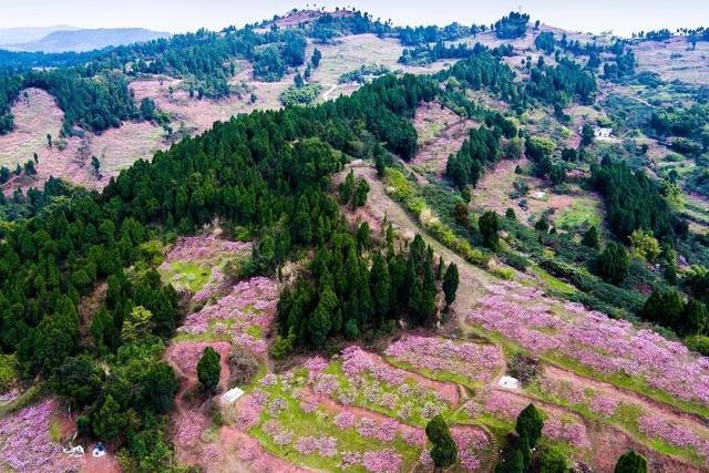 成都龙泉山城市森林公园 规划面积:1275平方公里 项目规模: 涉及成都