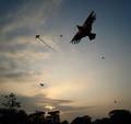 飞翔的风筝