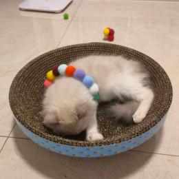 王啵啵是只猫
