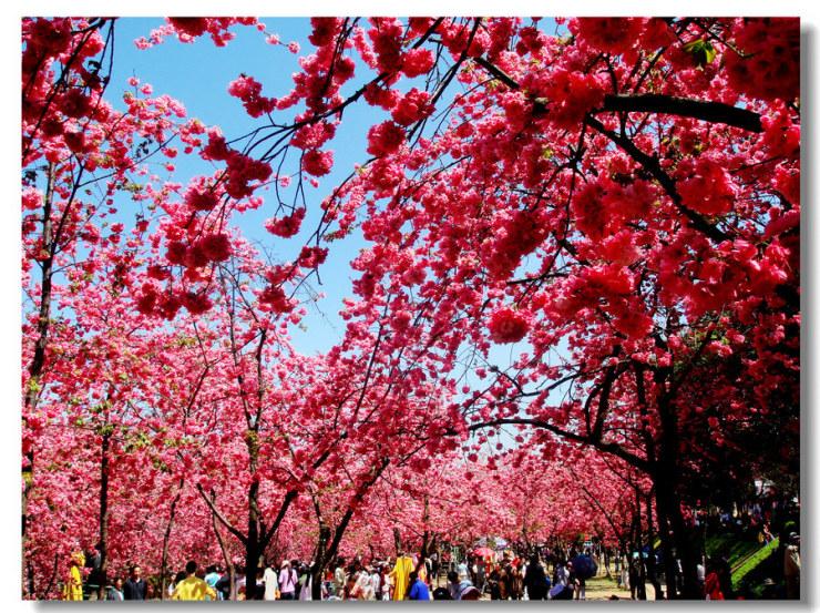 春城昆明:人和景明 春熙常在