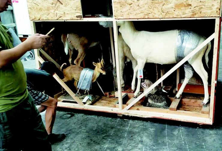 首批57件野生动物标本今日从美国送抵宜昌市博物馆