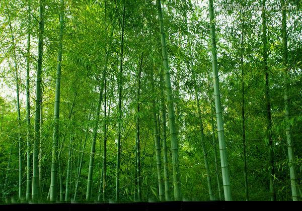 励志故事:竹子的故事