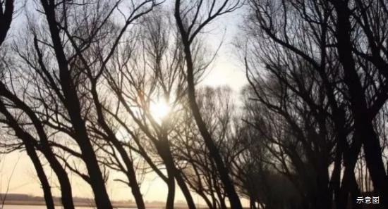 最美孔雀城之文安省级湿地公园