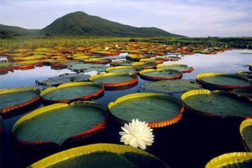 区域协同发展,霸州休闲绿色旅游新城崛起
