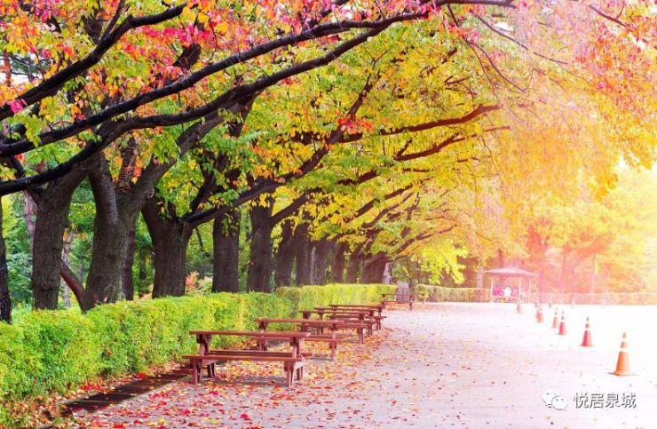 每一座仰望世界的城市都该有个公园墅区,济南无理由缺席别墅阵营
